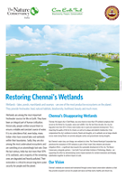 Chennai's Disappearing Wetlands